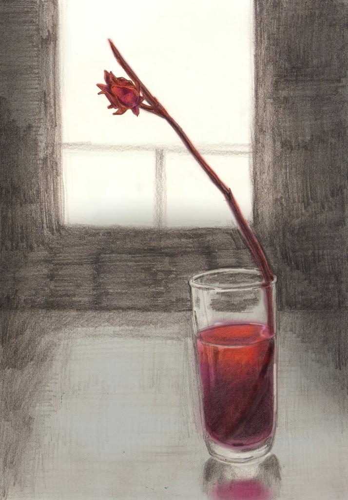 sorrel illustration by Phuong Nguyen